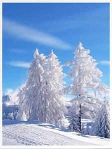 Описание деревьев зимой